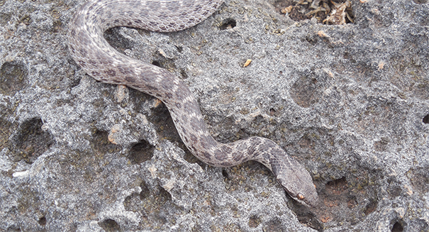 Snakebite! Thousands in danger as world runs out of antidote