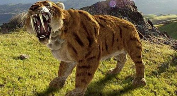 Saber-toothed tiger was a 'lion on steroids,' study finds