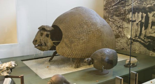 Amazing: Scientists discover armadillo the size of a Volkswagen