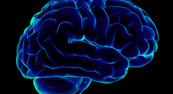 Scientists discover link between sex and the female brain