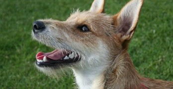 Incredible discovery about dogs shocks scientists