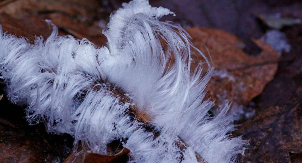 Mystery solved: What's causing weird 'hair ice'