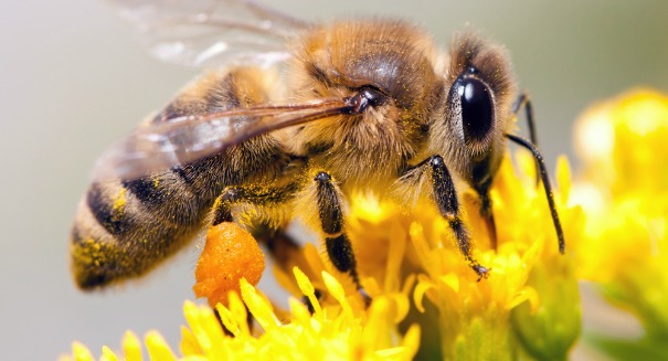 Honeybees are in big trouble