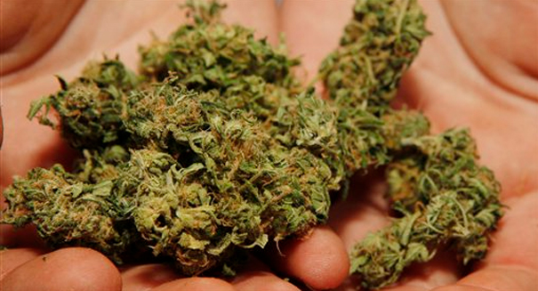 Could marijuana help cure broken bones?