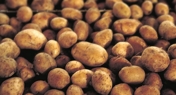 Eating potatoes could kill you … seriously