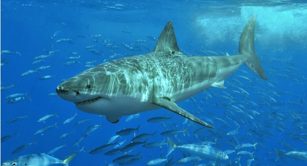 Scientists stunned to find our arms and legs came from sharks