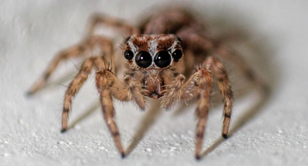 Spider discovery stuns scientists