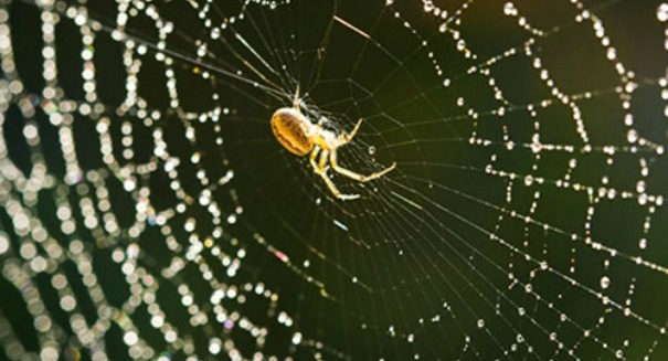 Stunning spider silk discovery could revolutionize the materials industry [VIDEO]
