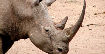 Huge rhino discovery stuns scientists