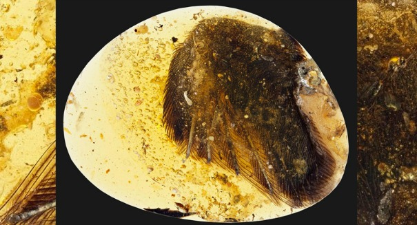 Scientists stunned to find dinosaur-era bird trapped in amber [PHOTO]