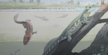 Scientists make an important fossil find in South Africa