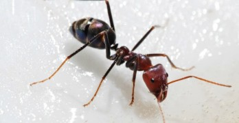 Massive discovery about ants shocks scientists