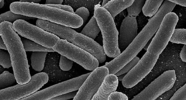 Breakthrough: Scientists fight nasty large intestine disease with new Merck drug Bezlotoxumab to battle Clostridium Difficile