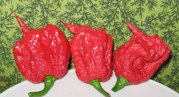 World's hottest pepper causes big problem in New York