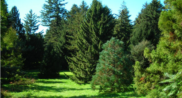 Stunning discovery: Trees are increasing global warming