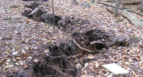 Mysterious crack opens up deep in Michigan forest — what caused it?