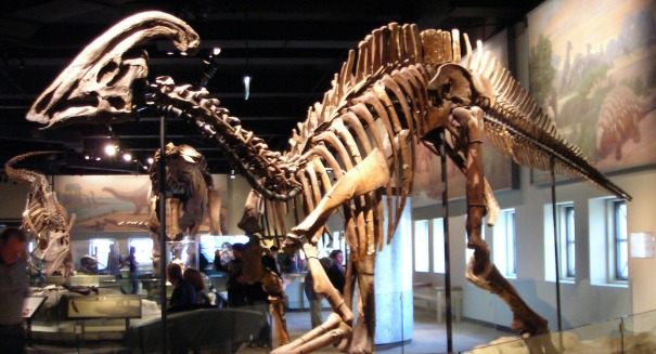 Huge dinosaur discovery shocks scientists