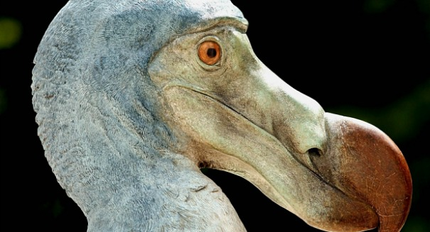 The Dodo, probably the most famous bird.