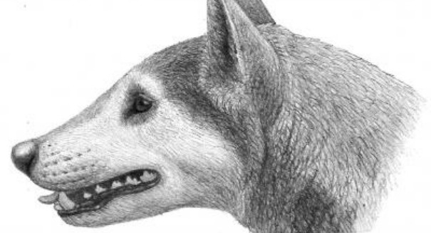 Scientists discover frightening 'bone-crushing dog'