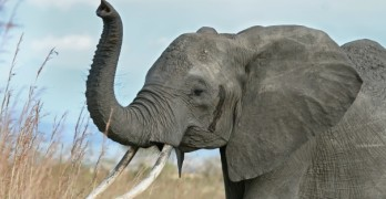 Huge elephant discovery floors scientists