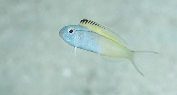 Incredible fish discovery stuns scientists