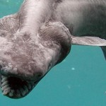 Scientists shocked by creature found off the coast of Portugal