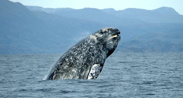 Shocking report: Whales face extinction