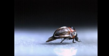 Scientists stunned by incredible ladybug discovery