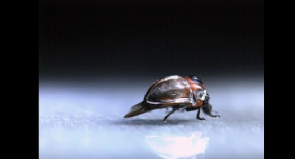 Ladybug discovery stuns scientists