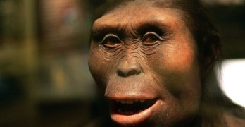 Scientists astonished by Lucy discovery