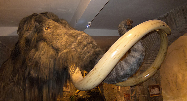 Workers astonished to find Ice Age mammoth fossils in home development