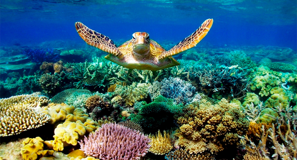 Scientists astonished by Great Barrier Reef discovery