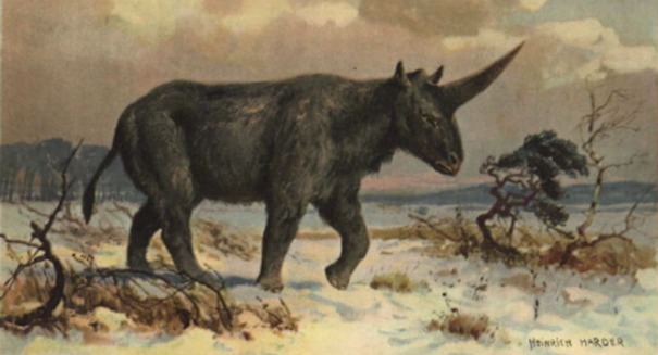 Shocking discovery: Ancient humans may have come across mysterious 'Siberian unicorn'