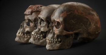 Ancient skull could unlock the secrets of ape evolution