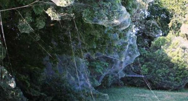 Massive spider web found in Texas