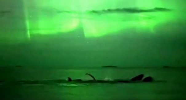 Stunning viral video shows whales under Northern Lights [VIDEO]